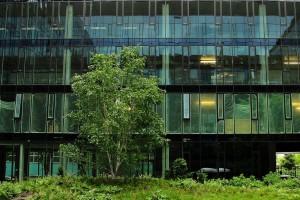 Zielono pracownikowi. Nowoczesne biura z dostępem do zieleni