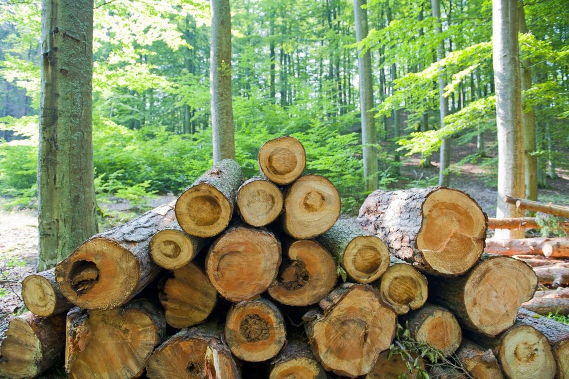 NIK: w miastach mniej drzew przez osiedla i galerie handlowe