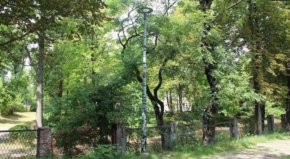 Chorzów ma energooszczędne latarnie wyglądające jak brzozy