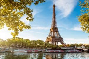 W luksusowej dzielnicy Paryża pojawiły się... owce - w roli ekologicznych kosiarek