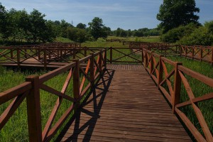 Zobacz jak zmienił się Śląski Ogród Botaniczny