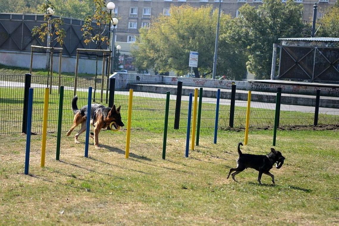 Architektura z myślą o czworonogach: Psi wybieg w Warszawie