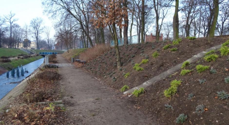 IKEA zazieleniła Bydgoszcz w ramach rekompensaty