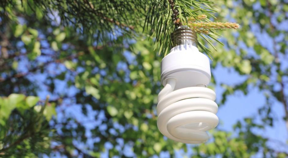 Zielone światło dla eko projektów w Szczecinie