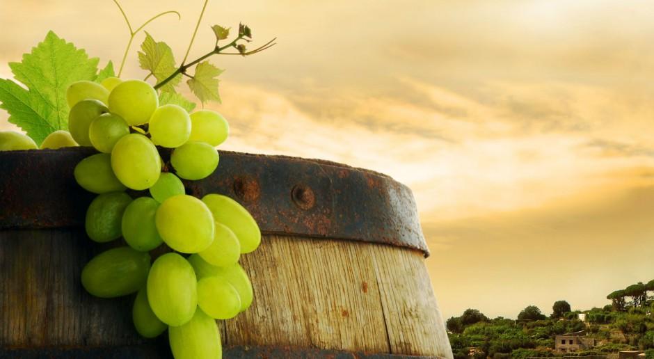Lubuskie Centrum Winiarstwa - budowa już się rozpoczęła