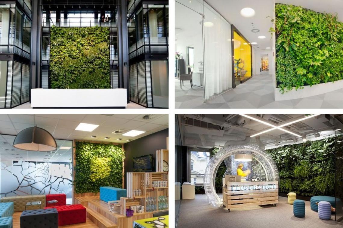 Ściana zieleni, czyli jak natura wchodzi do biur