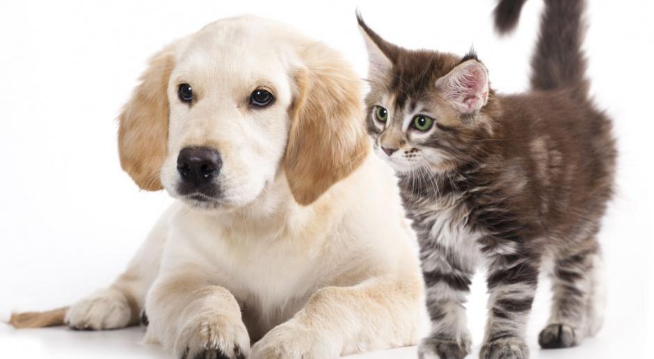 Wiemy, kto zaprojektuje nowe schronisko dla zwierząt w Sopocie