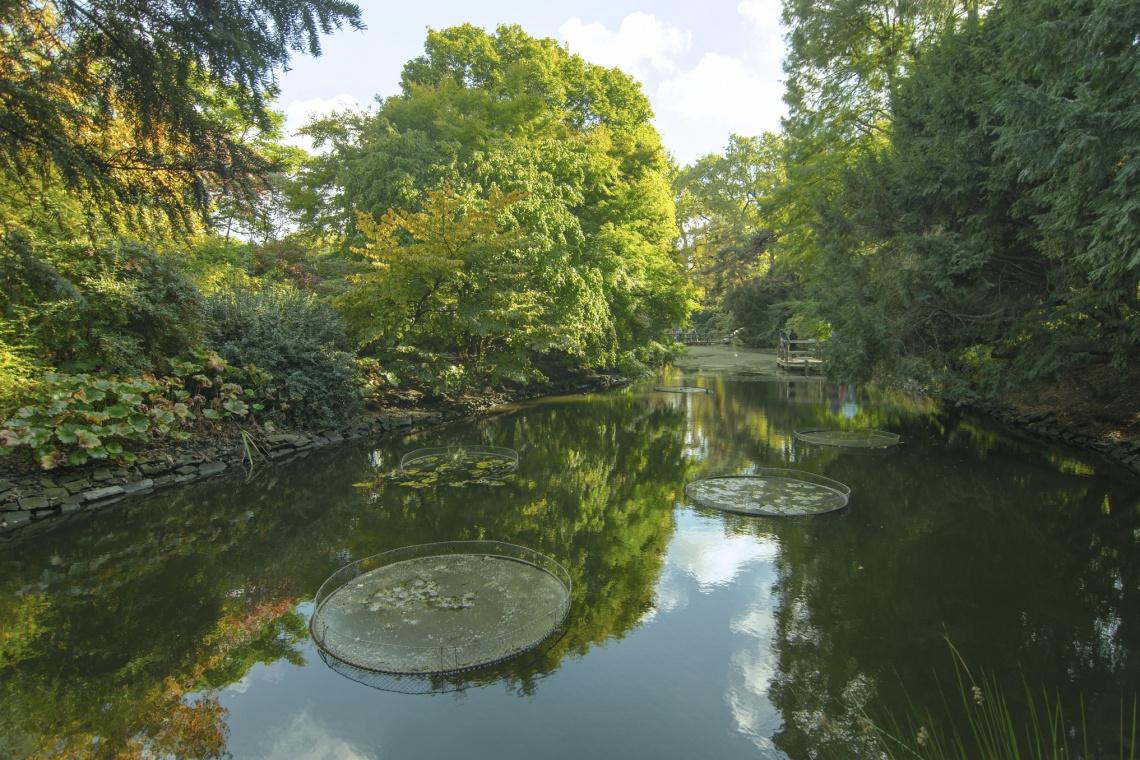 Zaprojektuj designerski budynek edukacyjny Leśnego Ogrodu Botanicznego