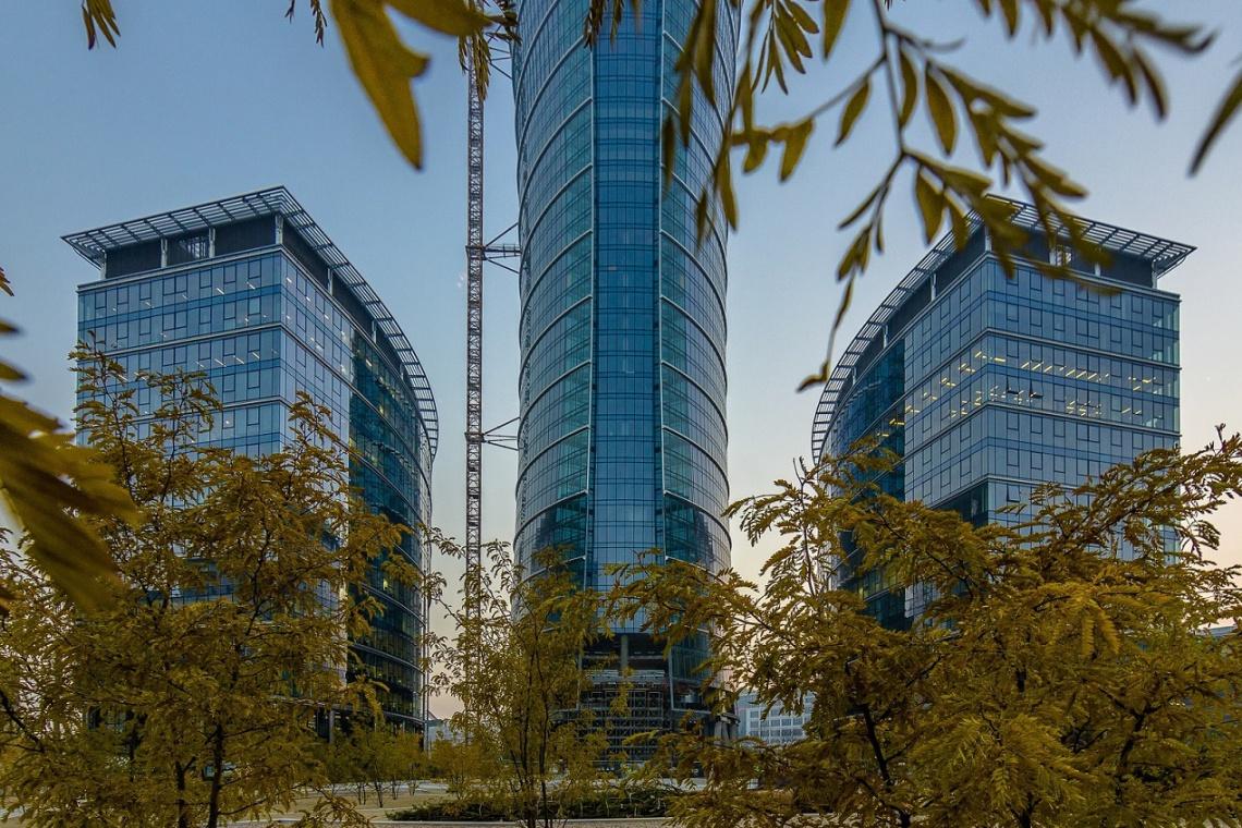 Sadzą nowe drzewa na Placu Europejskim