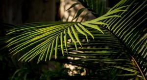 Gdańską palmiarnię czekają wielkie zmiany