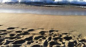 Rewitalizacja plaży nad jeziorem Skanda czy strefa dla psów? Znamy już odpowiedź