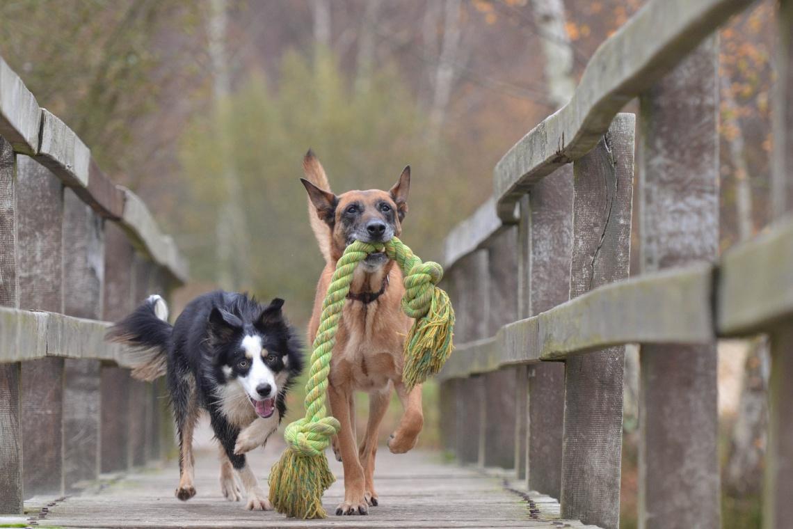 Największy psi park zrealizują w Warszawie