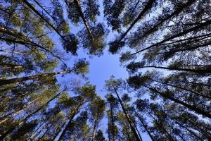 Park Zdrojowy w Jelitkowie czeka na zmiany