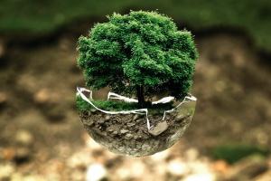 Posadzić drzewo na cześć dziecka. Ten projekt okazał się sukcesem, będzie powtórka