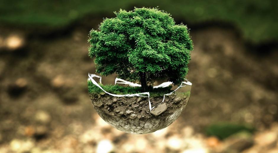Gdańsk zachęca do zgłaszania drzew mogących stać się pomnikami przyrody