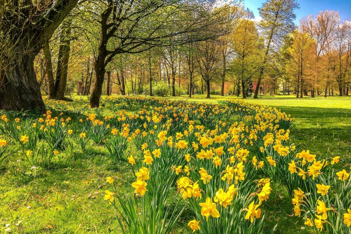 Katowice zamiast trawników będą mieć łąki kwietne