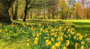 Bytom rewitalizuje park: ukończona Góra Miłości i Ogród Bytomski