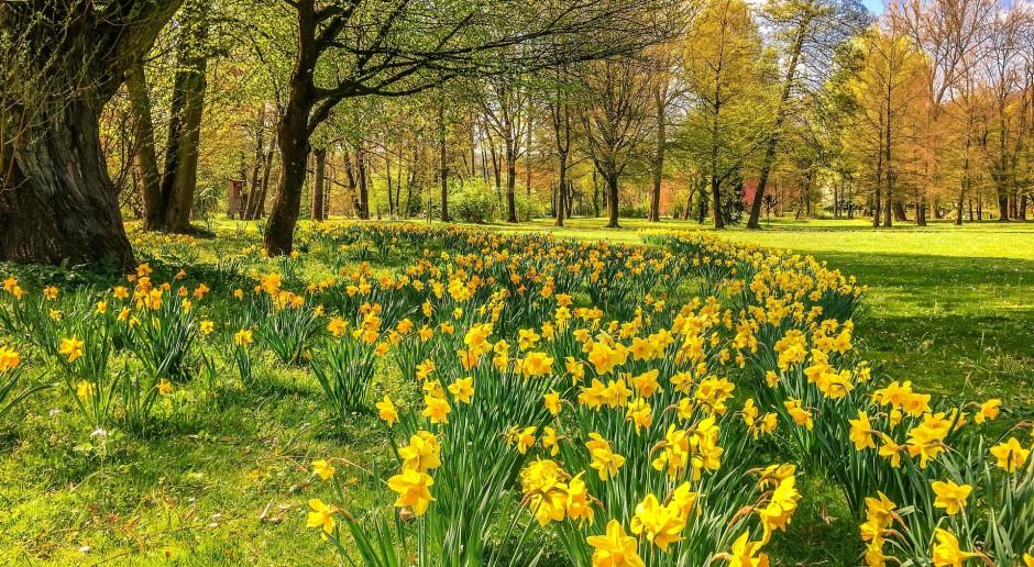 XVIII-wieczny ogród w Supraślu ma szansę odzyskać dawną świetność