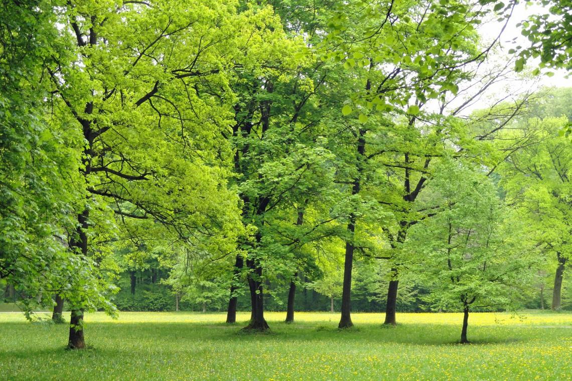 Śląsk stawia na zieleń! Ponad 40 mln zł na tereny przyrodnicze w miastach