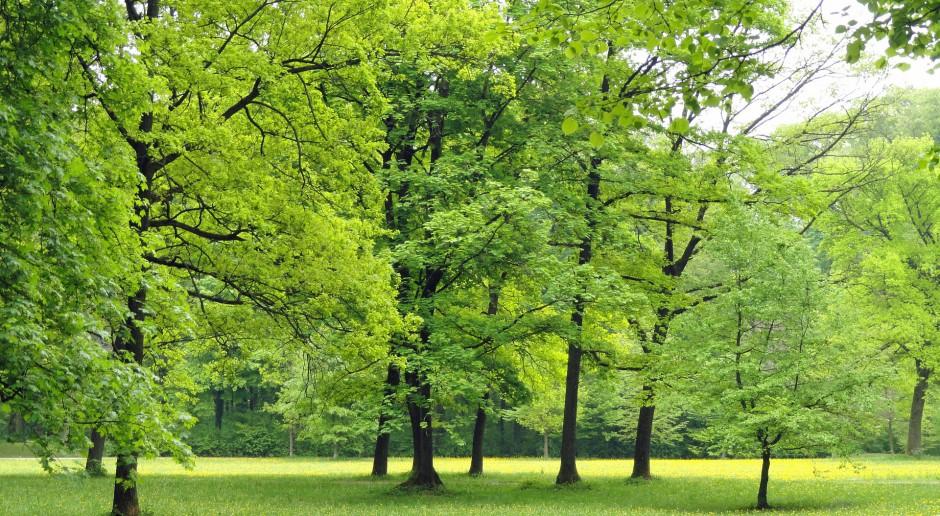 Zabytkowy Park Habsburgów utonie wśród nowej zieleni