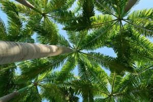 Rewitalizacja palmiarni w Parku Oliwskim