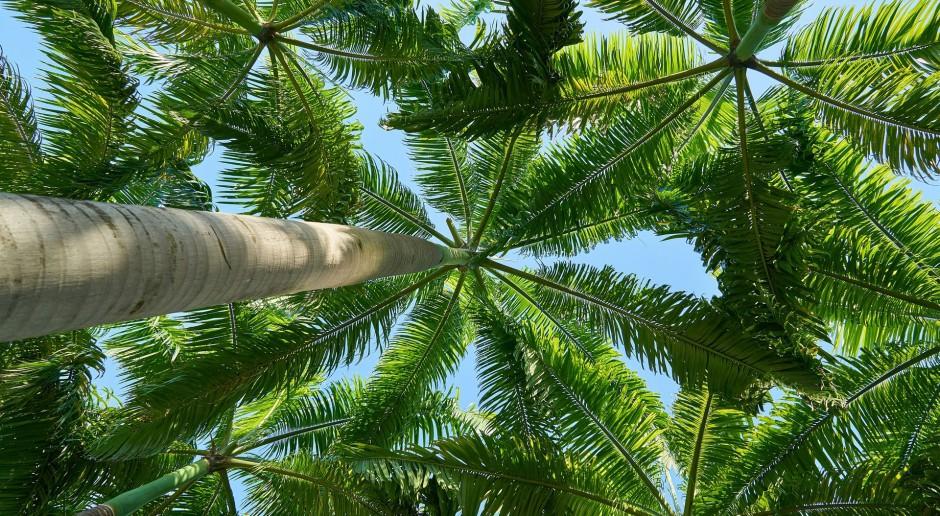 Geopark planuje rozbudowę Ogrodu Botanicznego