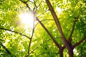 Wiosenne sadzenie drzew w Warszawie
