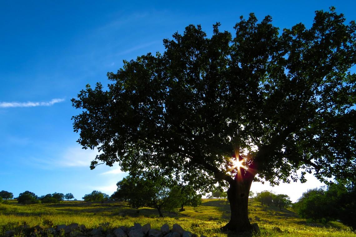 Ekolodzy w hołdzie miejskim drzewom