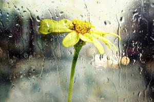 Ogrody deszczowy - nowy trend w polskich miastach?