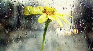 W Gdyni powstał ogród deszczowy