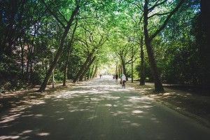 Kilkaset tysięcy nowych roślin na ulicach Łodzi
