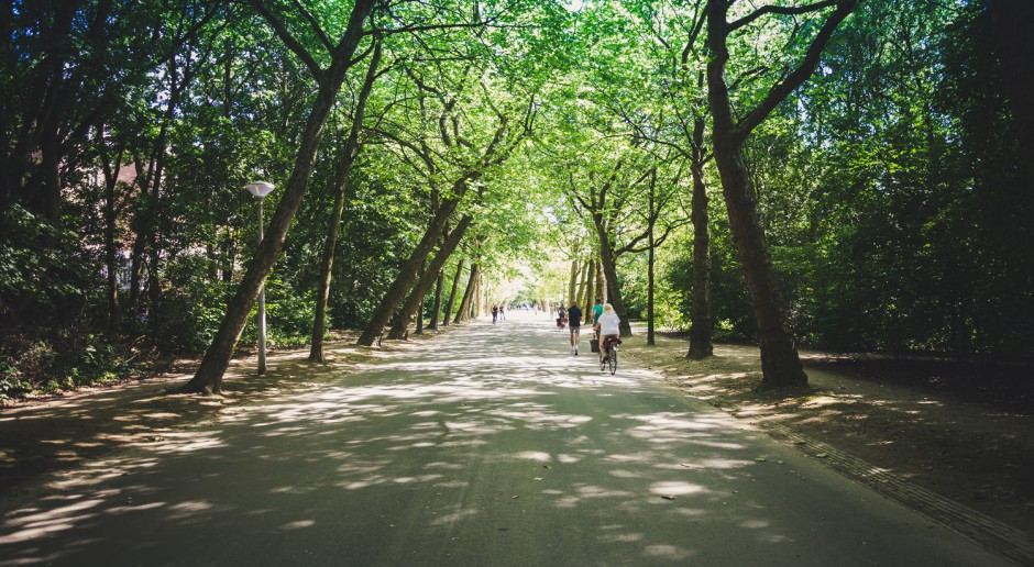 Rusza odbudowa cennego drzewostanu w zabytkowym Parku Habsburgów