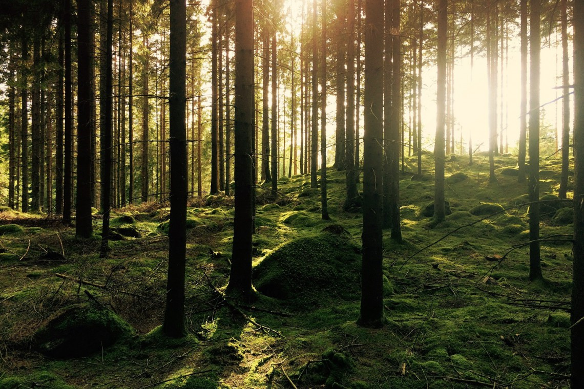 Góry Łosiowe - nowy park krajobrazowy w kujawsko-pomorskiem