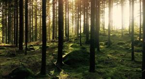Białowieski Park Narodowy może się powiększyć