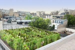 Paryskie Kultury Ogrodowe, czyli stolicę Francji czeka... zazielenienie