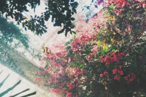 Ogrody krakowian – nowy koncept na zieleń w mieście