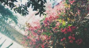 Ogrody działkowe dla warszawiaków