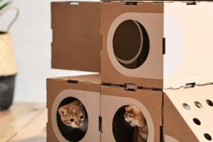 Miasto dla... kotów