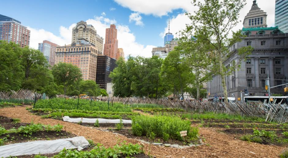 Miejskie farmy - czeka nas boom, który nie ominie nawet centrów handlowych