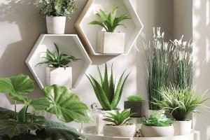 O roślinach we wnętrzu, czyli jak się dotlenić nie wstając od biurka