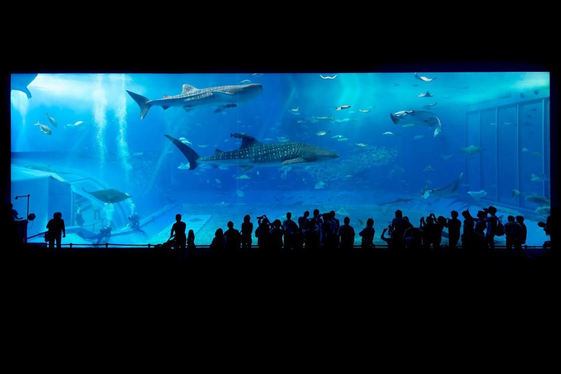 Jeszcze w tym roku może rozpocząć się budowa oceanarium w Gdańsku