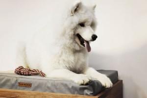 Polska marka połączyła wyjątkowy design i miłość do zwierząt