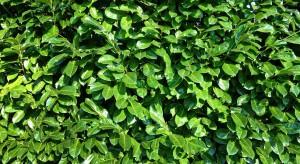 Antysmogowe zielone ściany - tego chcą mieszkańcy