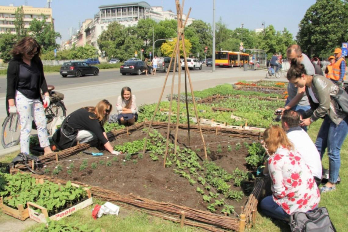 Plac Na Rozdrożu z Miejskim Ogrodem Warzywnym