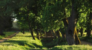 Ursus zyska niezwykłą przestrzeń rekreacji. Na starcie budowa ekoparku w miejscu pofabrycznego terenu