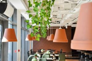 Kolory natury i zielone fikusy. Oto najnowsza restauracja na Służewcu Przemysłowym