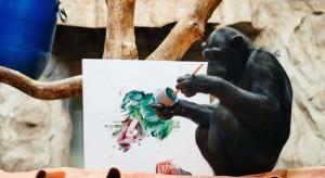 Święto Sztuki w warszawskim zoo. Atrakcją: niezwykła artystka, czyli szympansica Lucy