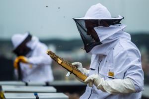 Do Alchemii zawitały... pszczoły