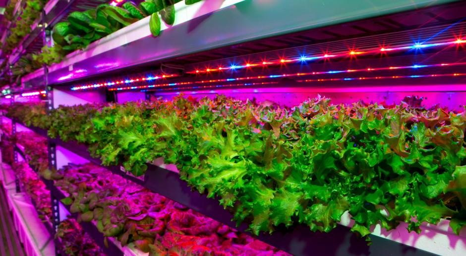 Powstaje największy na świecie obiekt do pionowej uprawy roślin