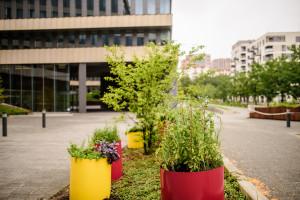 Park Rozwoju posadzi warzywa. Niezwykły projekt Florabo